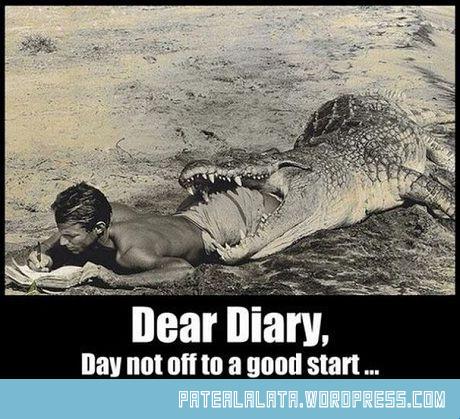 funny-crocodile-diary