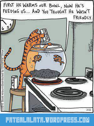 funny-cat-worming-fish