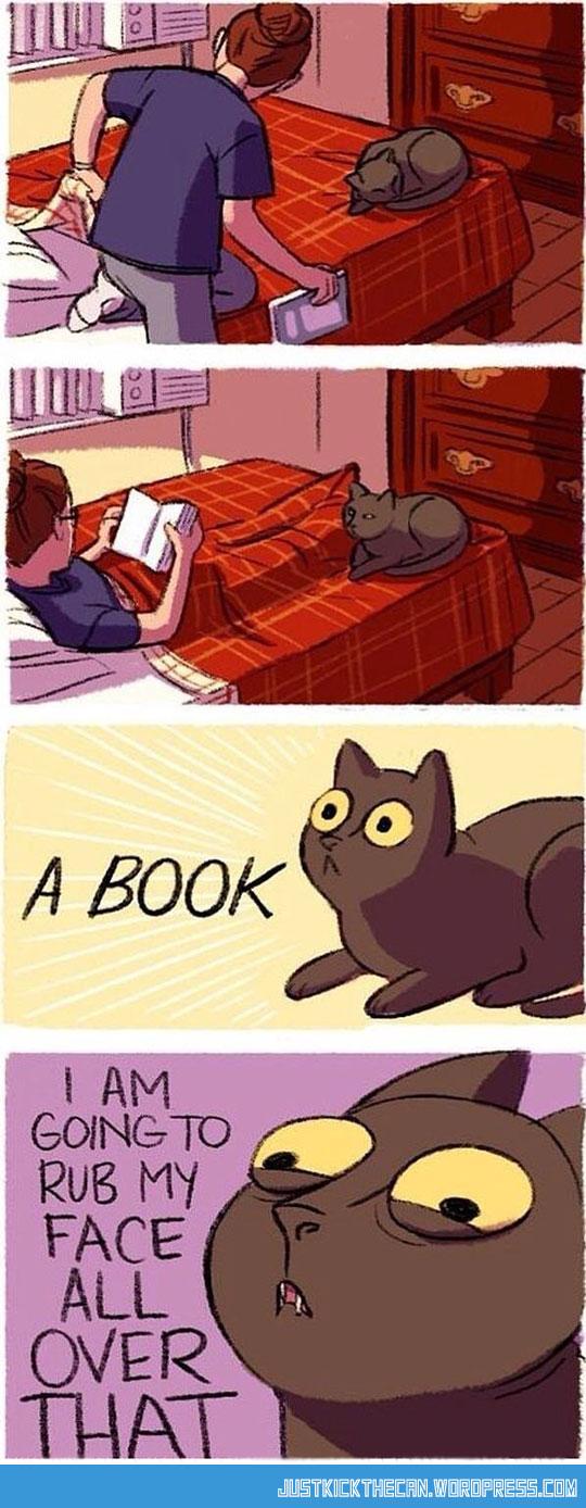 funny-cat-book-rub